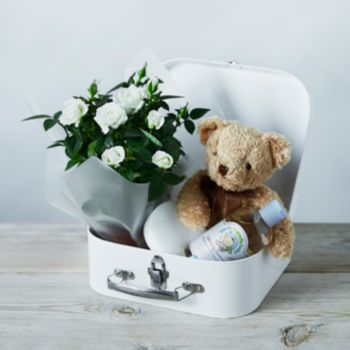 New baby gift set flowers plants for 23rd december waitrose new baby gift set flowers plants for 23rd december waitrose florist negle Gallery
