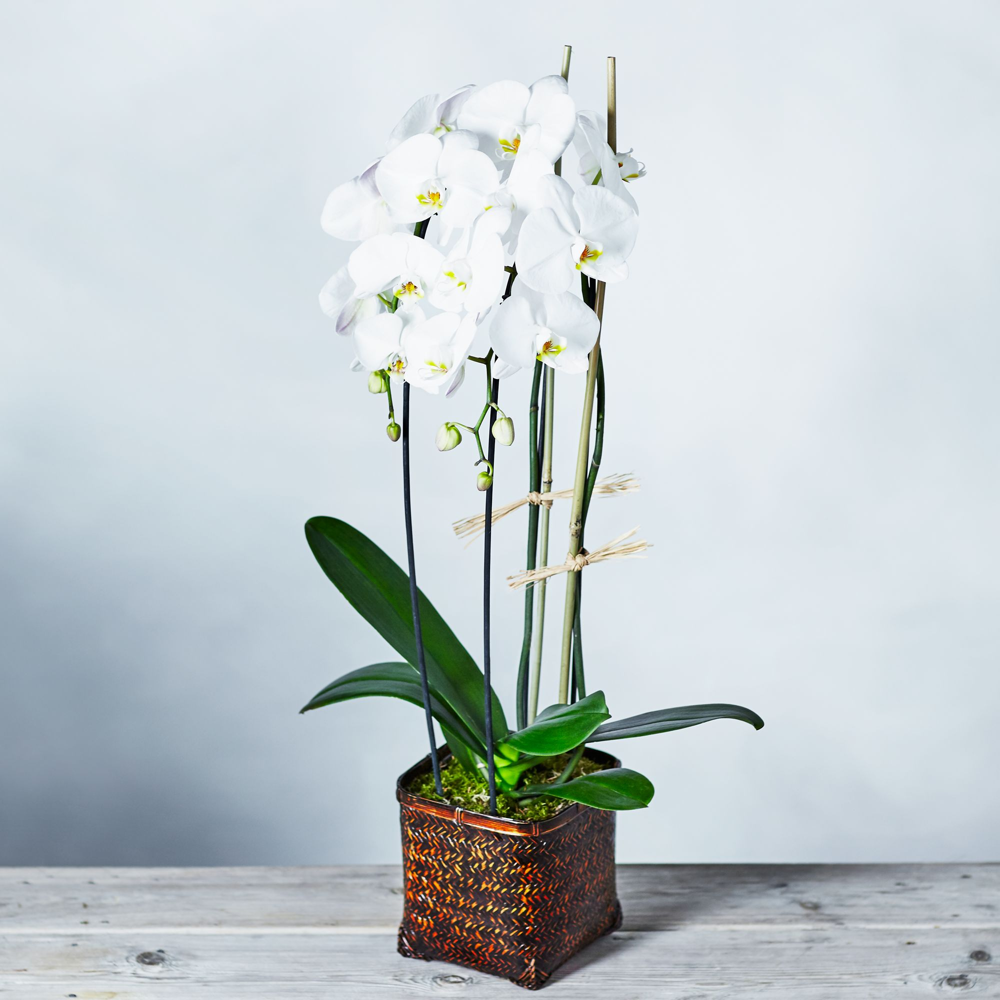 Image of Cascade Orchid Basket White
