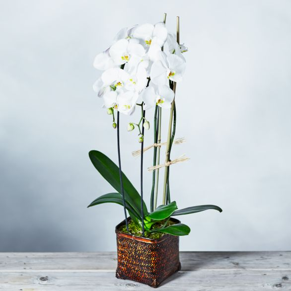 Cascade Orchid Basket White