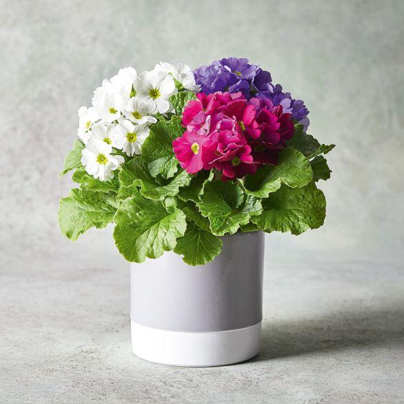 Vintage British Plants Hanging Basket Purple.