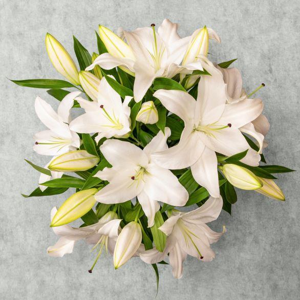 Oriental Lilies - ready to arrange White
