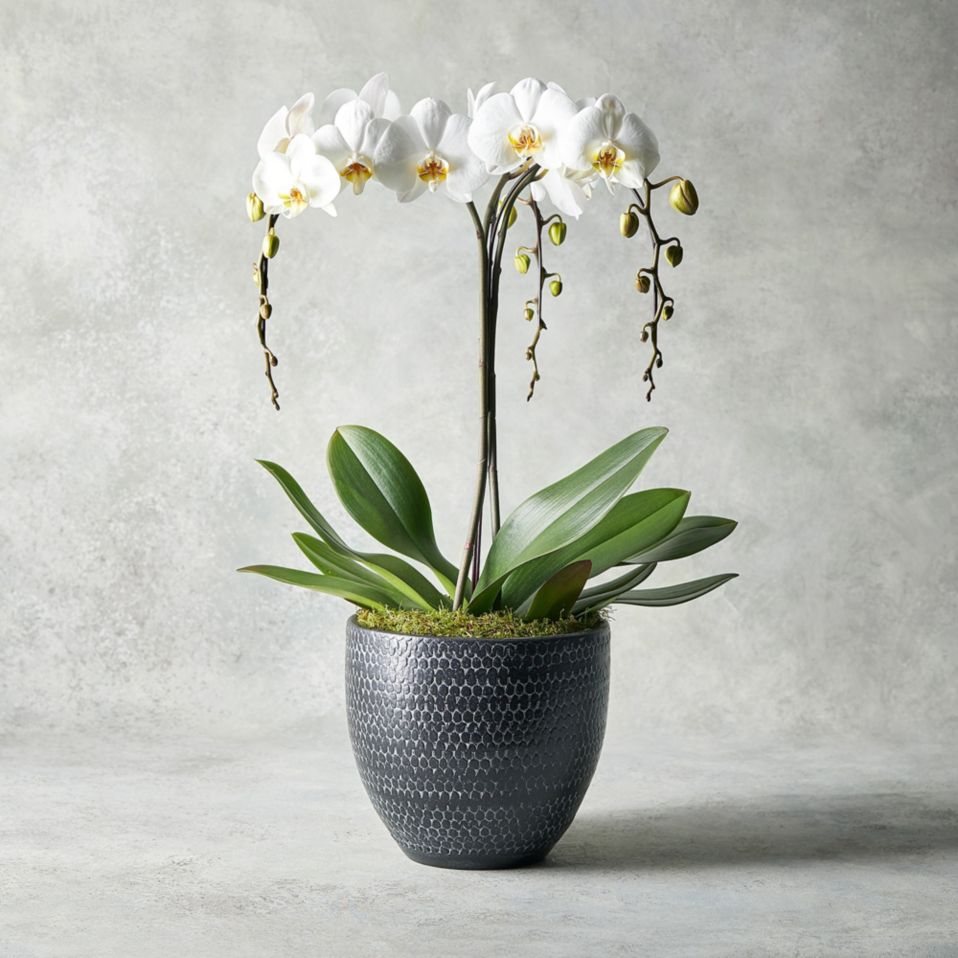 Luxury Orchid Bowl White
