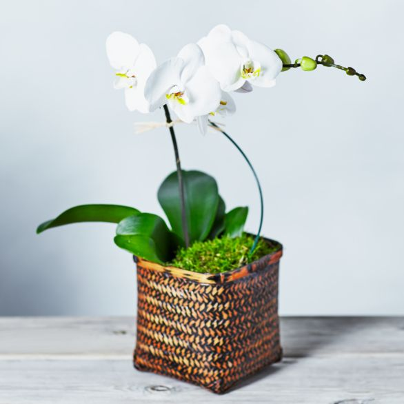 Spiral Orchid Basket White