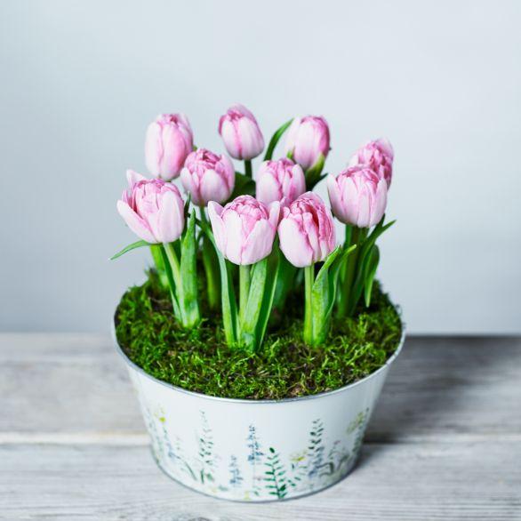 British Tulip Bulbs Planter Pink