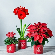 Christmas Planter Trio