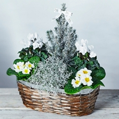 Large White Winter Garden Planter