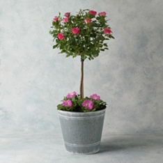 Luxury Potted Rose Tree