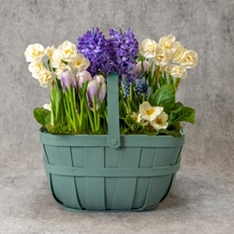 Large British Pastel Spring Bulbs Garden Planter