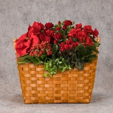 Large Red Christmas Planted Basket