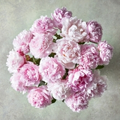 Medium Scented British Peonies Posy