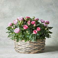 Large Pastel Rose Basket