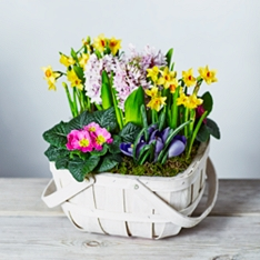 Spring Bulbs Basket
