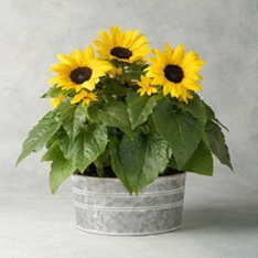 Sunflower Garden Planter