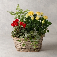 Extra Large Autumn Flowering Basket