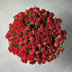 100 Sweetheart Roses - ready to arrange