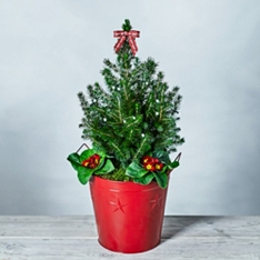 Red Christmas Garden Planter