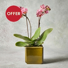 Mini Twin Stem Orchid Planter