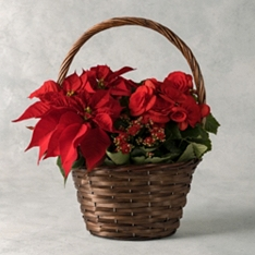 Red Christmas Planted Basket
