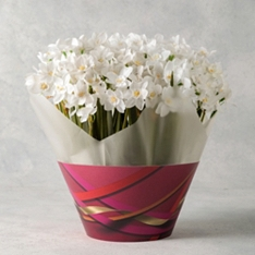 British Scented Narcissi Bulb Bowl