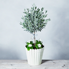Luxury Lavender Tree Garden Planter