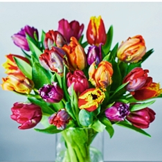 Speciality Tulips Collection - ready to arrange