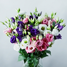 Mixed Lisianthus - ready to arrange