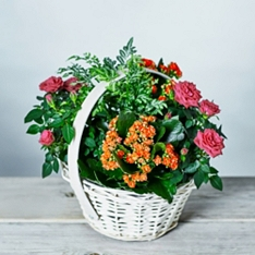 Bright Flowering Basket