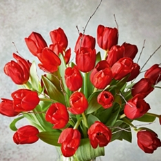 British Christmas Red Tulips - ready to arrange