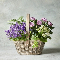 Large Pink Planted Basket