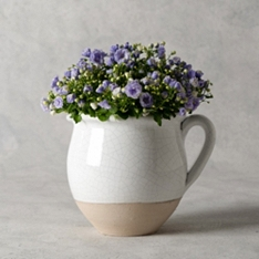 Large Campanula Basket