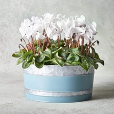 Vintage British Cyclamen Garden Planter