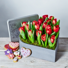 Red Tulips Heart Planter Gift Set