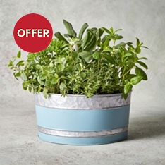 British Herb Garden Planter