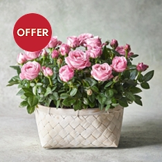 Large Rose Basket