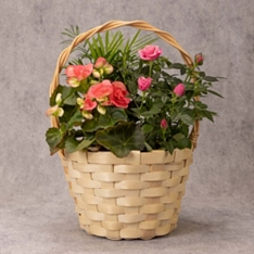 Mother's Day Pink Flowering Basket