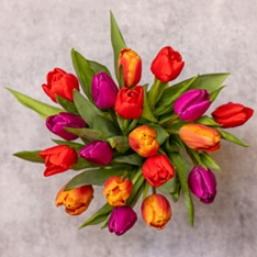British Tulips - ready to arrange