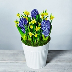 British Vibrant Spring Bulbs Garden Planter
