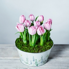 British Frilly Tulip Bulbs Bowl