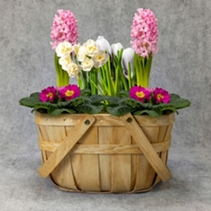 British Vibrant Spring Bulbs Basket