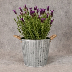 Flowering Lavender Garden Planter
