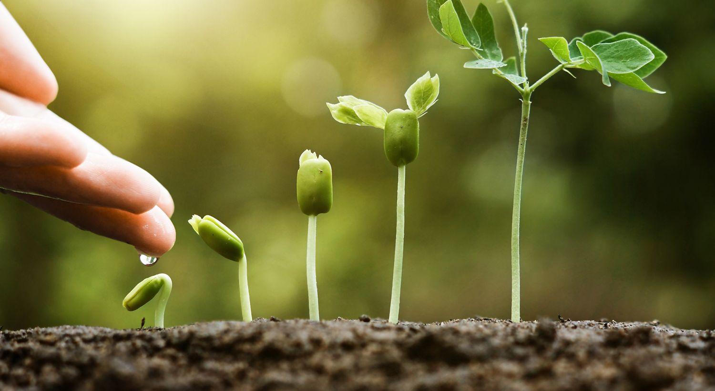 Grønne planter som vokser