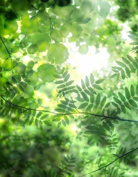 Abstrakte blader