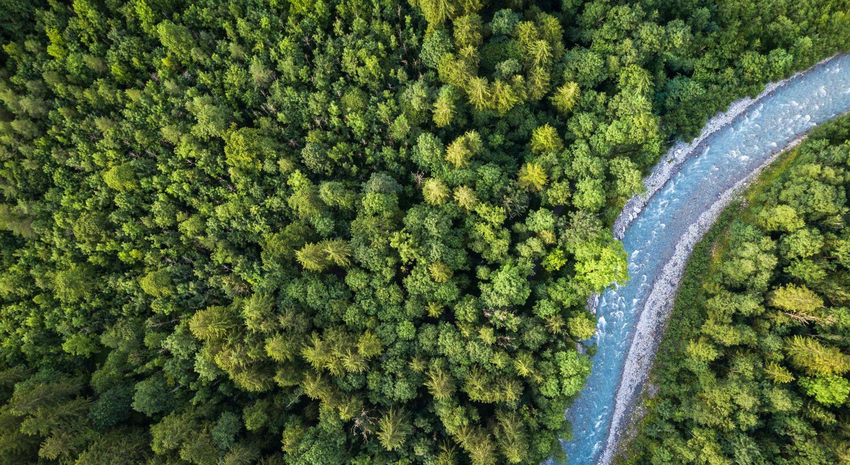 En skog med en elv som renner gjennom