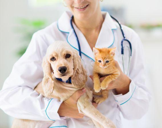 Dyrlege med hund og katt