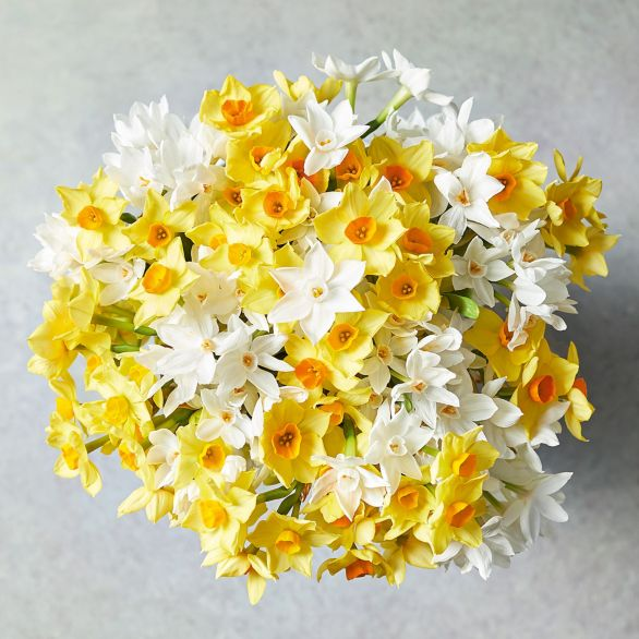 British Scented Mixed Narcissi - ready to arrange Yellow or orange
