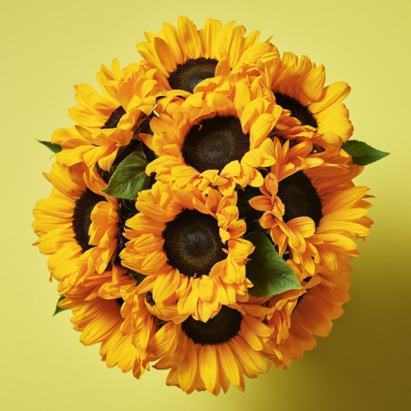 British Sunflowers - ready to arrange Yellow or orange