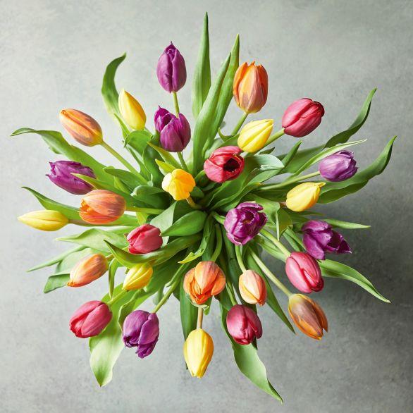 Medium British Tulips - ready to arrange Mixed vibrant