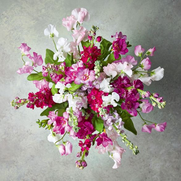 British Scented Sweet Peas Bouquet Pink