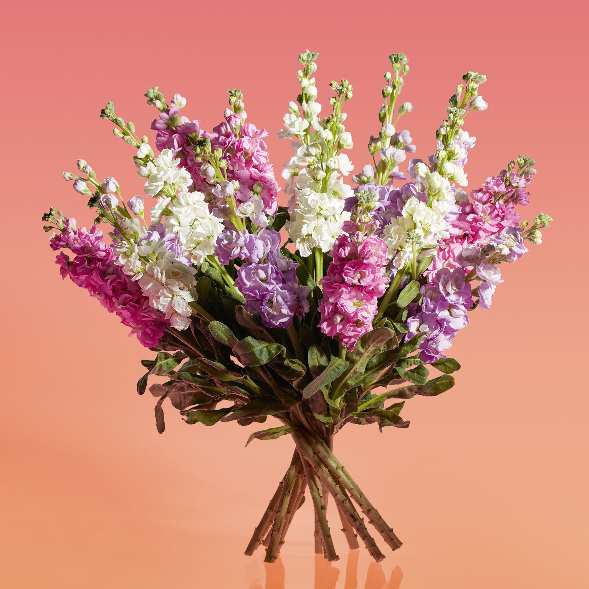 Valentine S Day Dozen Red Roses Gift Bag Waitrose Florist