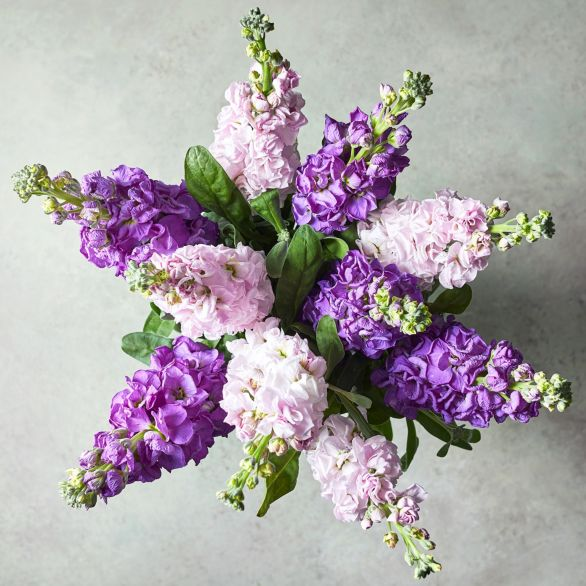 Abundance of Stocks Bouquet Purple